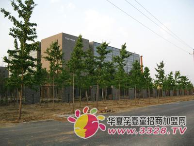 圣元公司植树种草 绿化环境